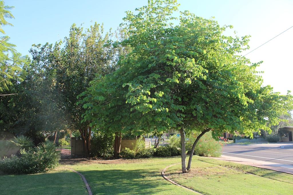 ArborealGarden-002